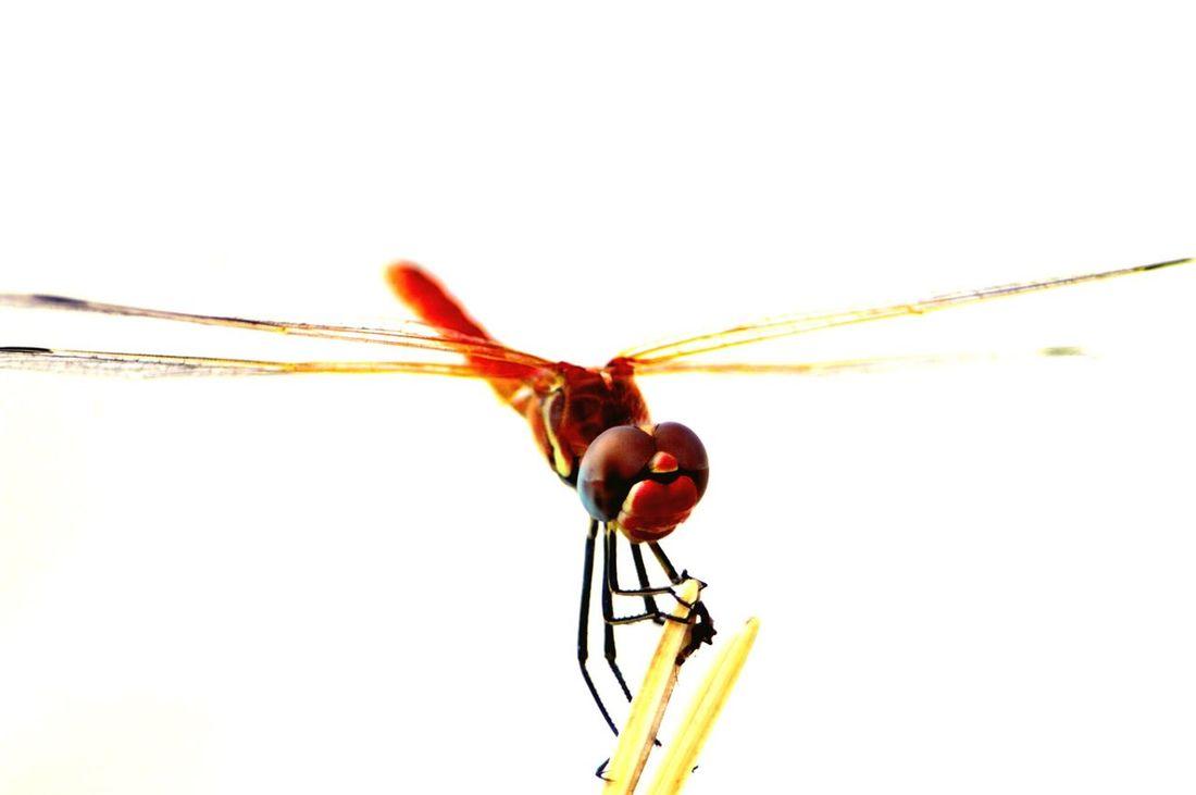 Flydragon Makro Photography Bug bugs Close-up Nature Outdoors Nature Photography Bugs
