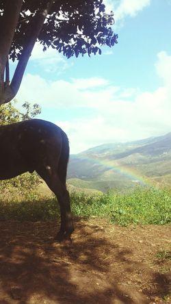 Caballo ESPAÑOL Hi! Likesforlikes Likealways Mountains Followme Followforfollow