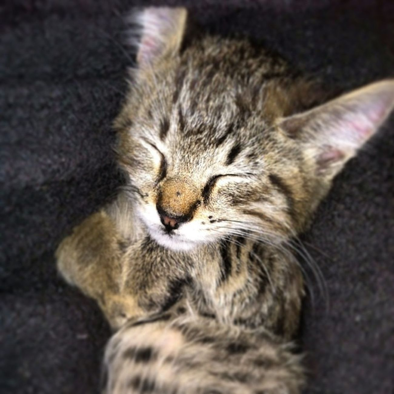 You can't tell me this don't melt your heart. ? Tinycurleduppawpaws Softkittywarmkitty