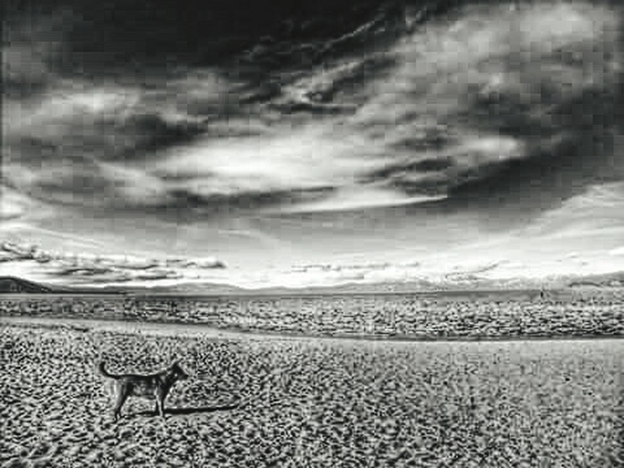 one animal, dramatic sky, nature, animals in the wild, animal themes, outdoors, cloud - sky, animal wildlife, no people, mammal, sky, landscape, scenics, safari animals, desert, beauty in nature, day, storm cloud, ostrich, bird, cheetah