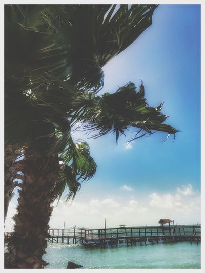 Water Sea Sky Day Tree Palm Tree No People Horizon Over Water Beach Nature Outdoors Scenics Beauty In Nature Beach Photography Saltlife Palm Tree Beach Collection Before Hurricane Harvey Rockport Texas