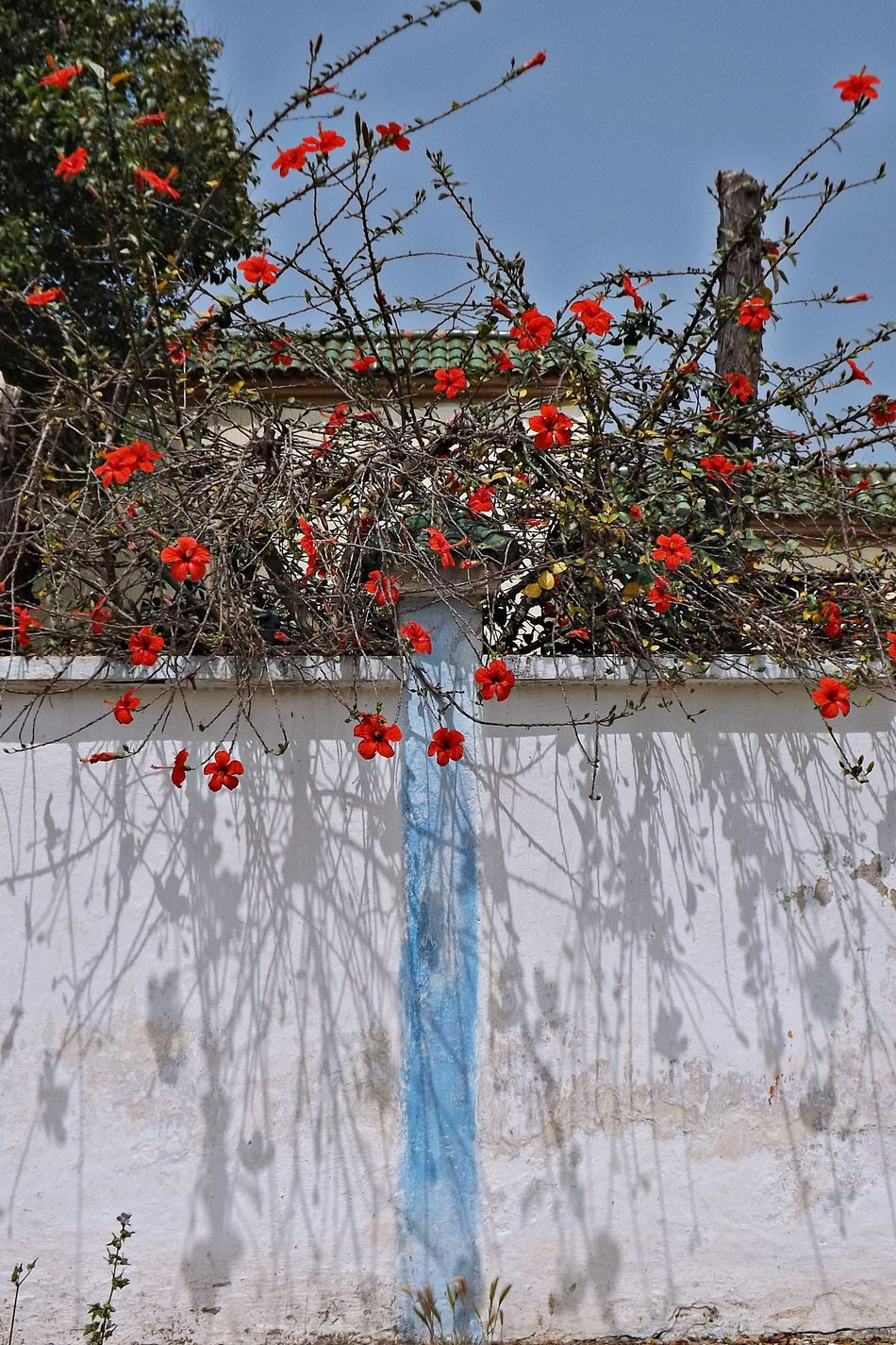 Beauty In Nature Blossom Branch Cold Temperature Day Flower Fragility Freshness Growth Hanging Low Angle View Mur Nature No People Ombre Outdoors Plant Red Rouge Siege Snow Springtime Toit Tree Winter