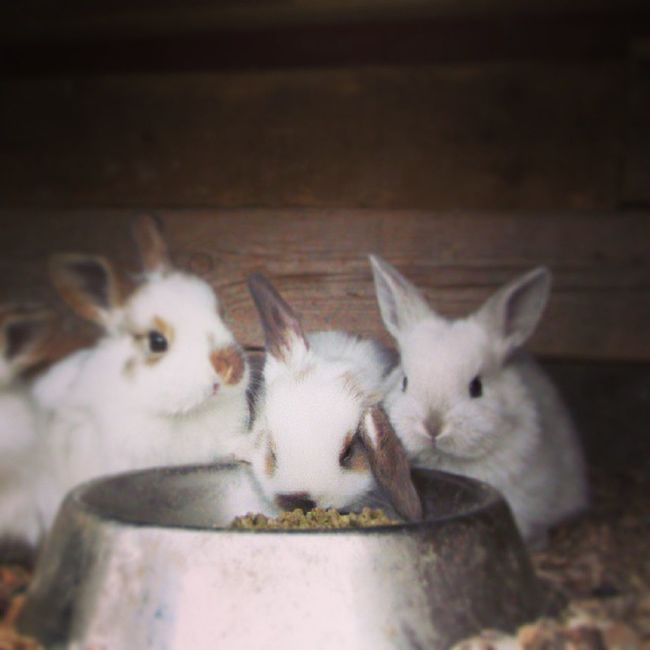 Rabbit Playing With The Animals My Rabbit Mr Rabbit