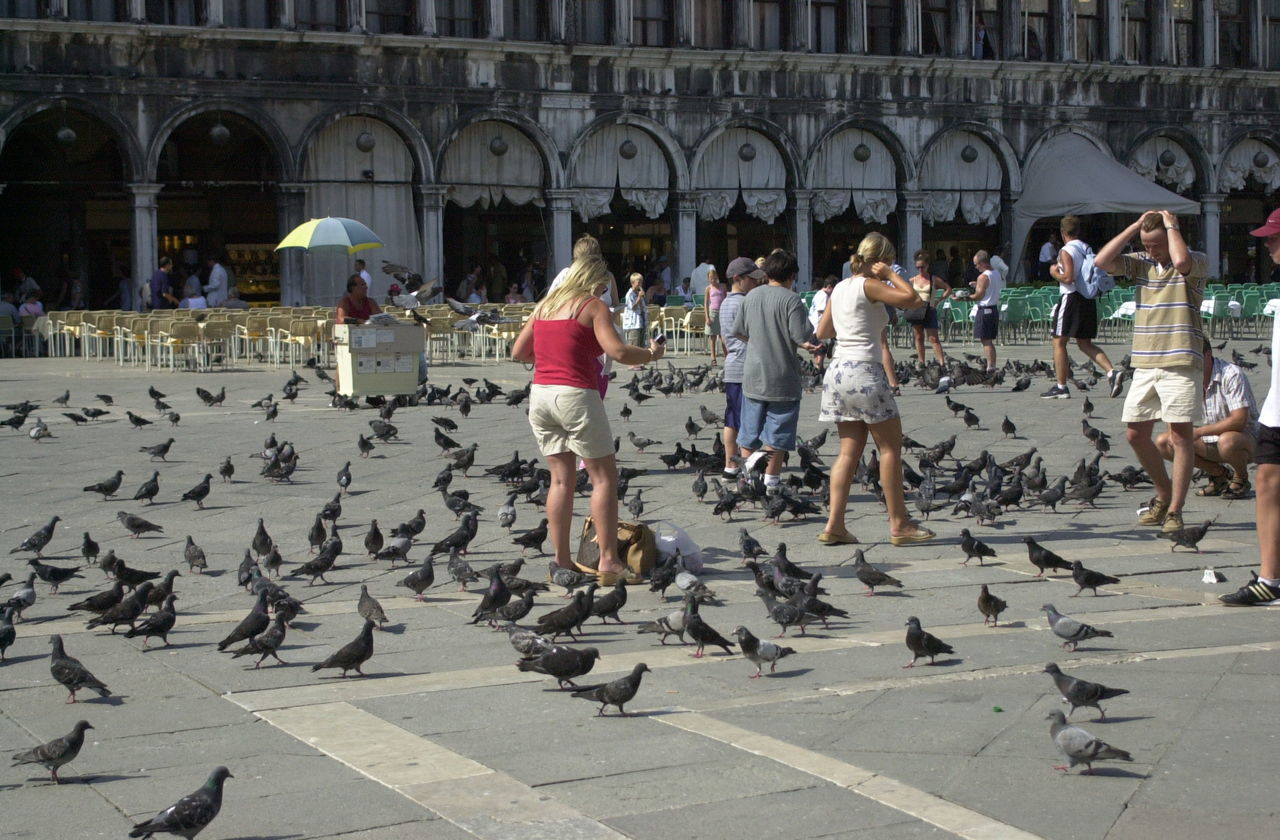 Adult Adults Only City Day Feeding Pigeons Large Group Of People Men Outdoors Palatzo People Pidgeons Politics And Government