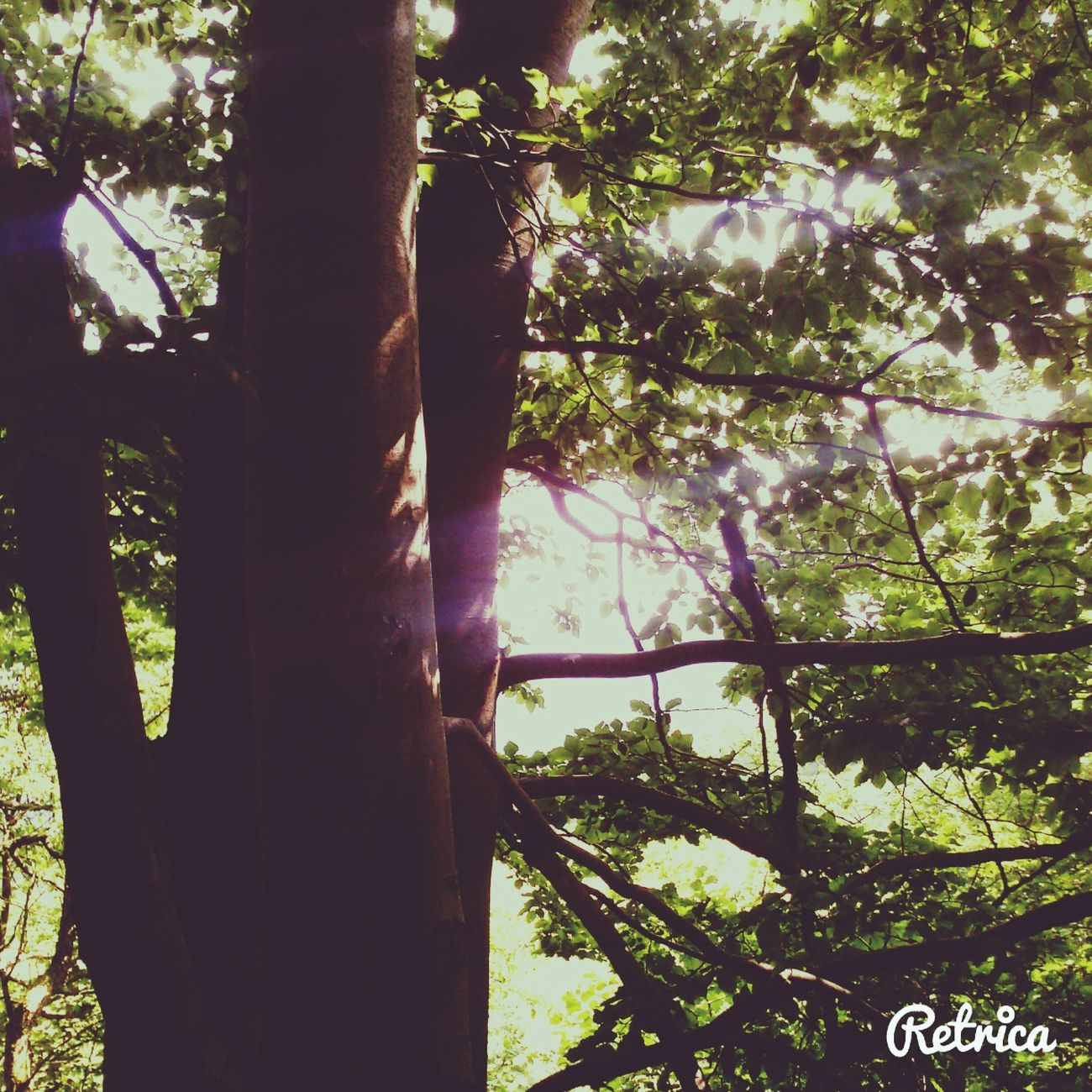 Nature :) Three Forest Walk :*