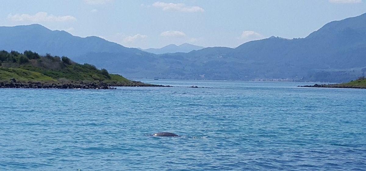 Lichadonisia Vulcano Island Evia Greece Beauty In Nature Mediterranean Monk Seals