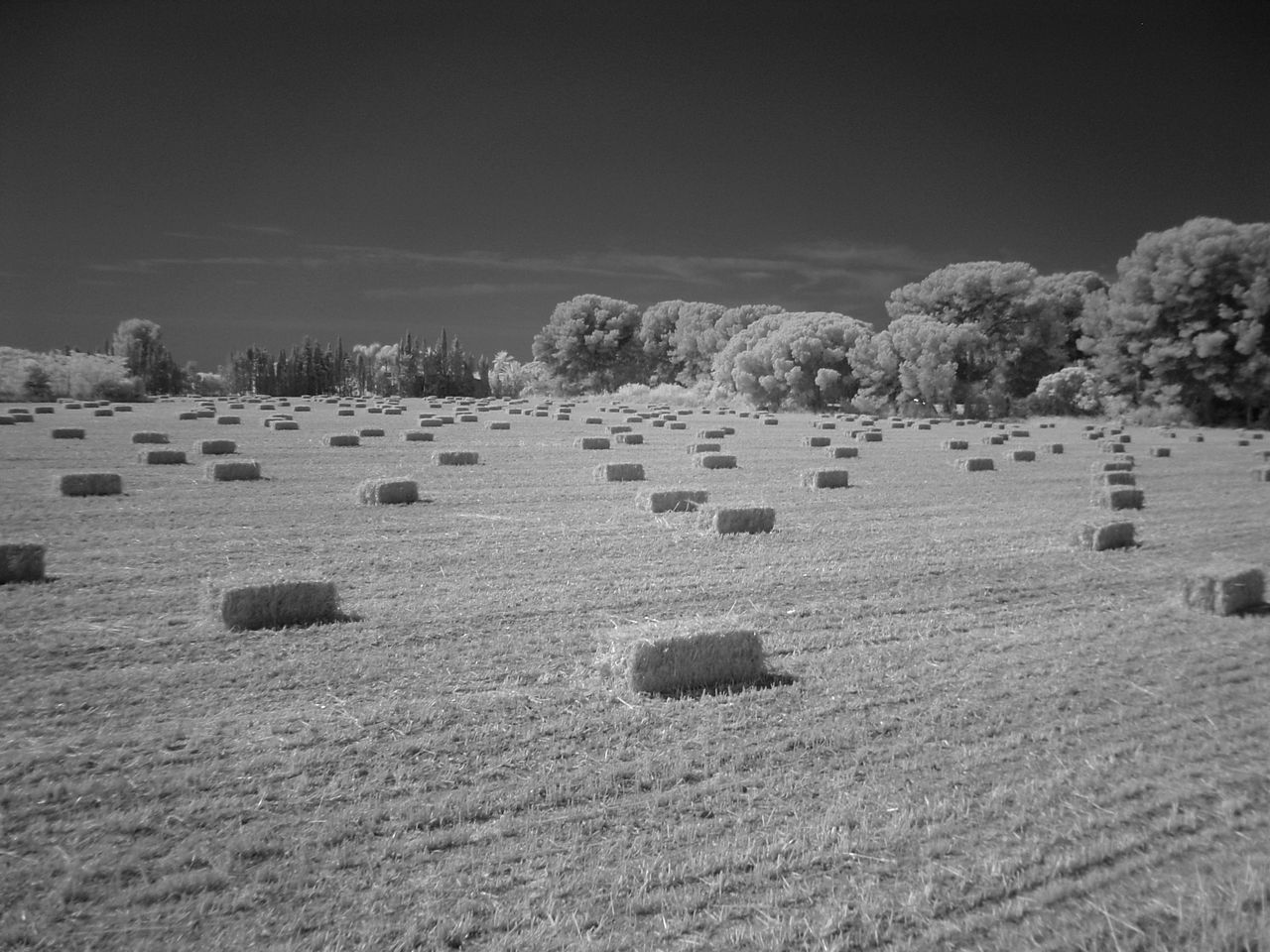 bale, agriculture, field, harvesting, hay bale, rolled up, rural scene, farm, hay, landscape, tranquility, no people, tranquil scene, nature, outdoors, sky, day, scenics, haystack, beauty in nature