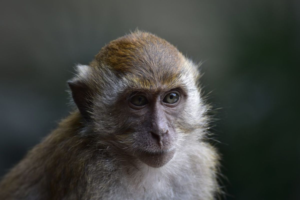 Monkey Primate Animal Wildlife Close-up Animal Body Part Eye Animal Themes No People Ape Portrait Intelligence Outdoors Living Organism Nature Focus Object