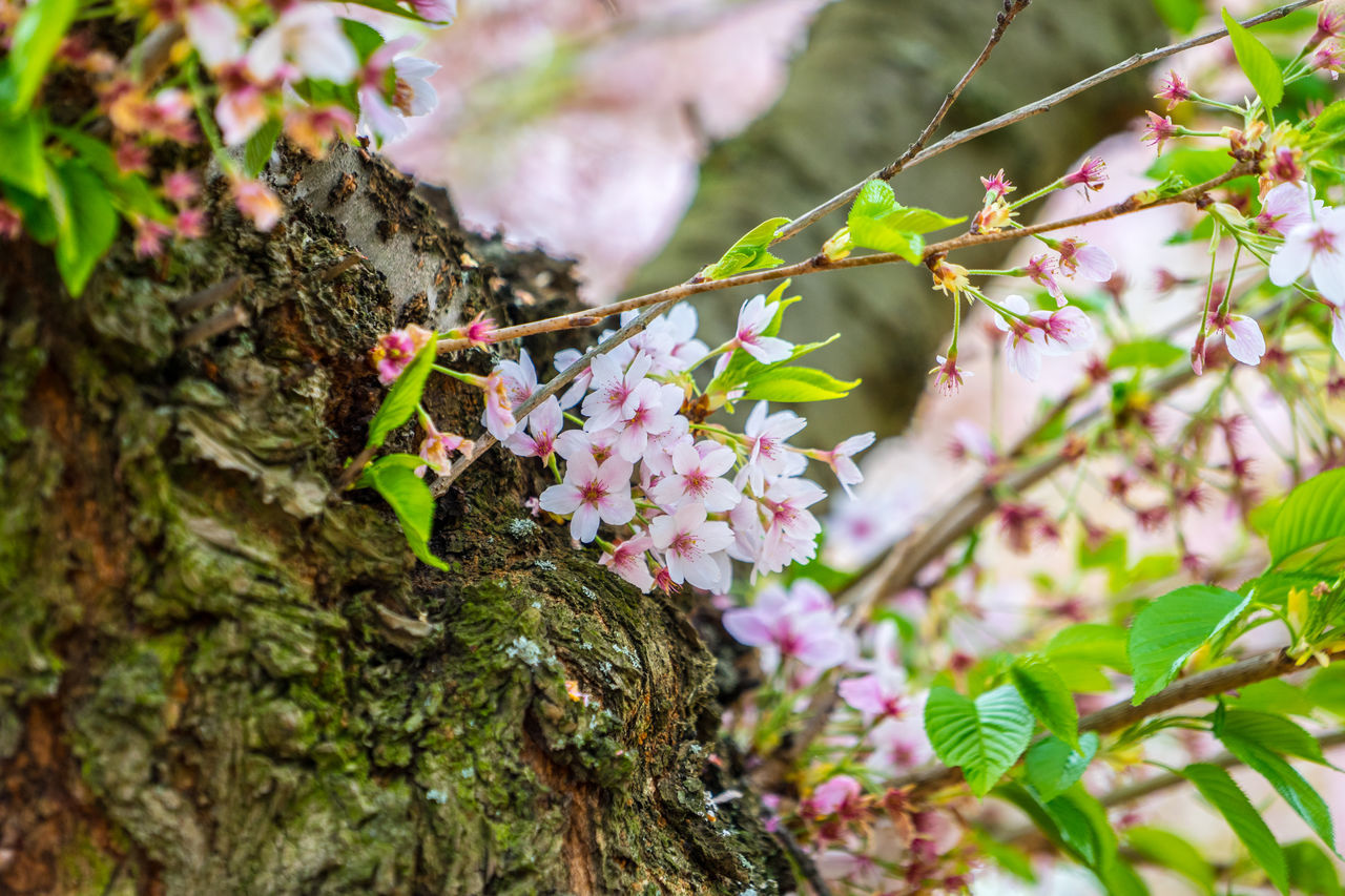 growth, flower, fragility, nature, beauty in nature, plant, freshness, no people, close-up, tree, day, leaf, outdoors, branch, pink color, green color, animal themes, flower head