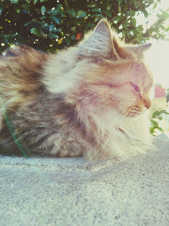 Cat Shining Bathed the Autumn Sunshine ☀️ EyeEm Best Shots Relaxing Garden Rocks Rainbow 🌈