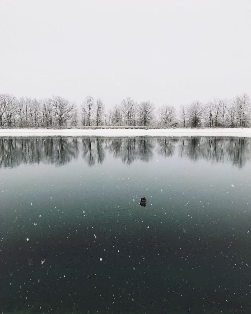 Nature Lake Cold Temperature Winter Tree Water Snow Bare Tree Reflection Tranquil Scene Beauty In Nature Tranquility No People Scenics Day Outdoors Clear Sky Frozen Animal Themes Frozen Lake Winter Lakes  Duck Resovoir