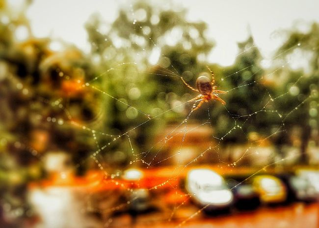 Spider Web Animal Themes Spider Focus On Foreground Close-up Fragility Natural Pattern Drop Day Nature Water Web Complexity Intricacy Spiderweb Dew Full Frame Outdoors Zoology No People