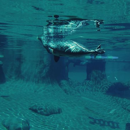 Look at this dog mermaid Harbor Seals Underwater