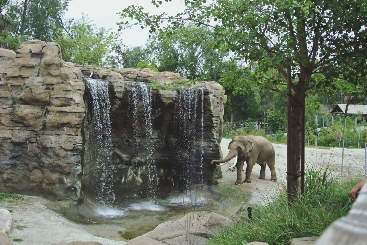 Elephant Water Fall LA Zoo Happy Place Animals Check This Out Enjoying Life Taking Photos Beautiful Day