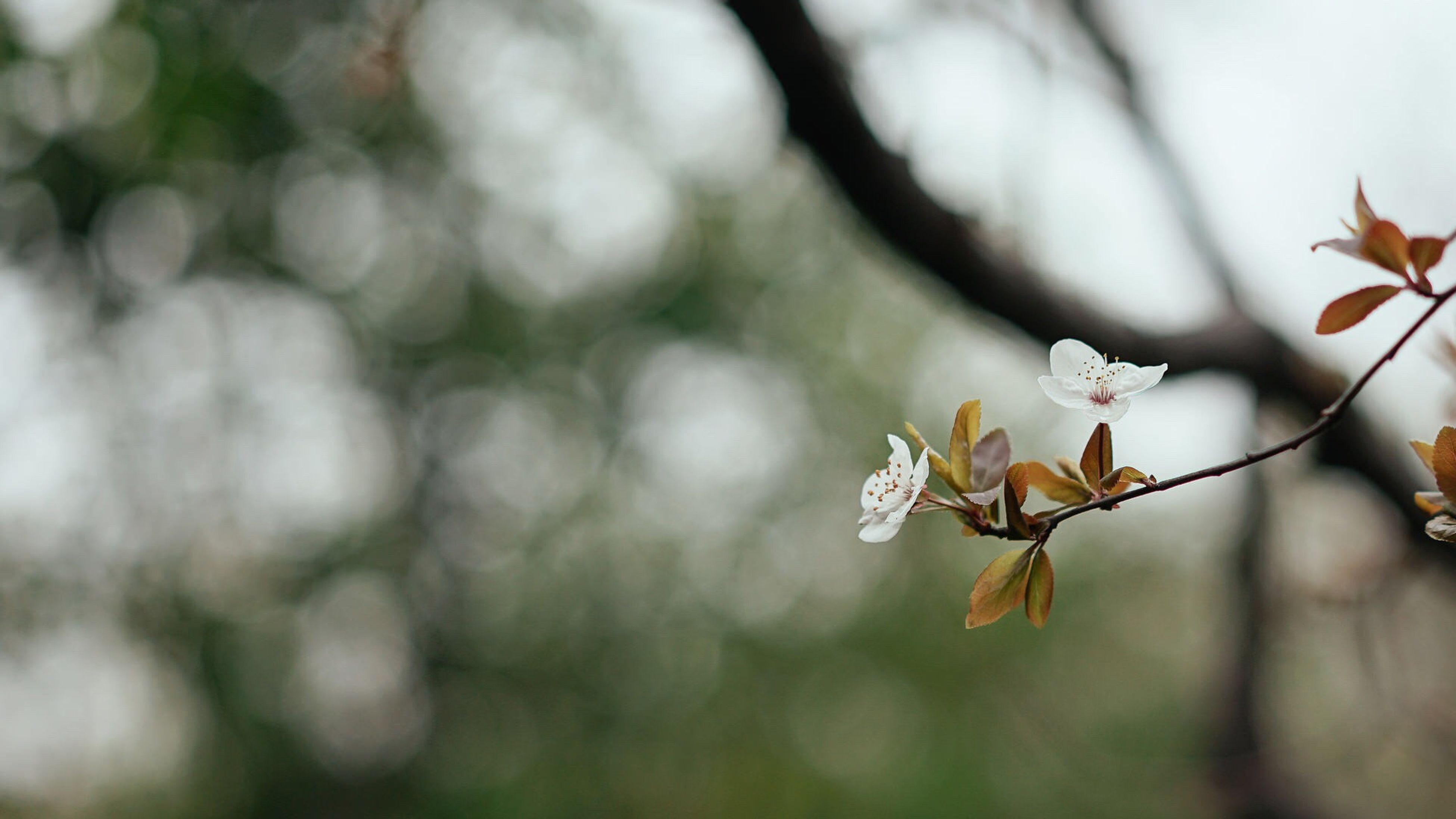 flower, focus on foreground, growth, fragility, freshness, close-up, nature, beauty in nature, branch, selective focus, stem, plant, twig, petal, tree, blooming, day, outdoors, in bloom, blossom