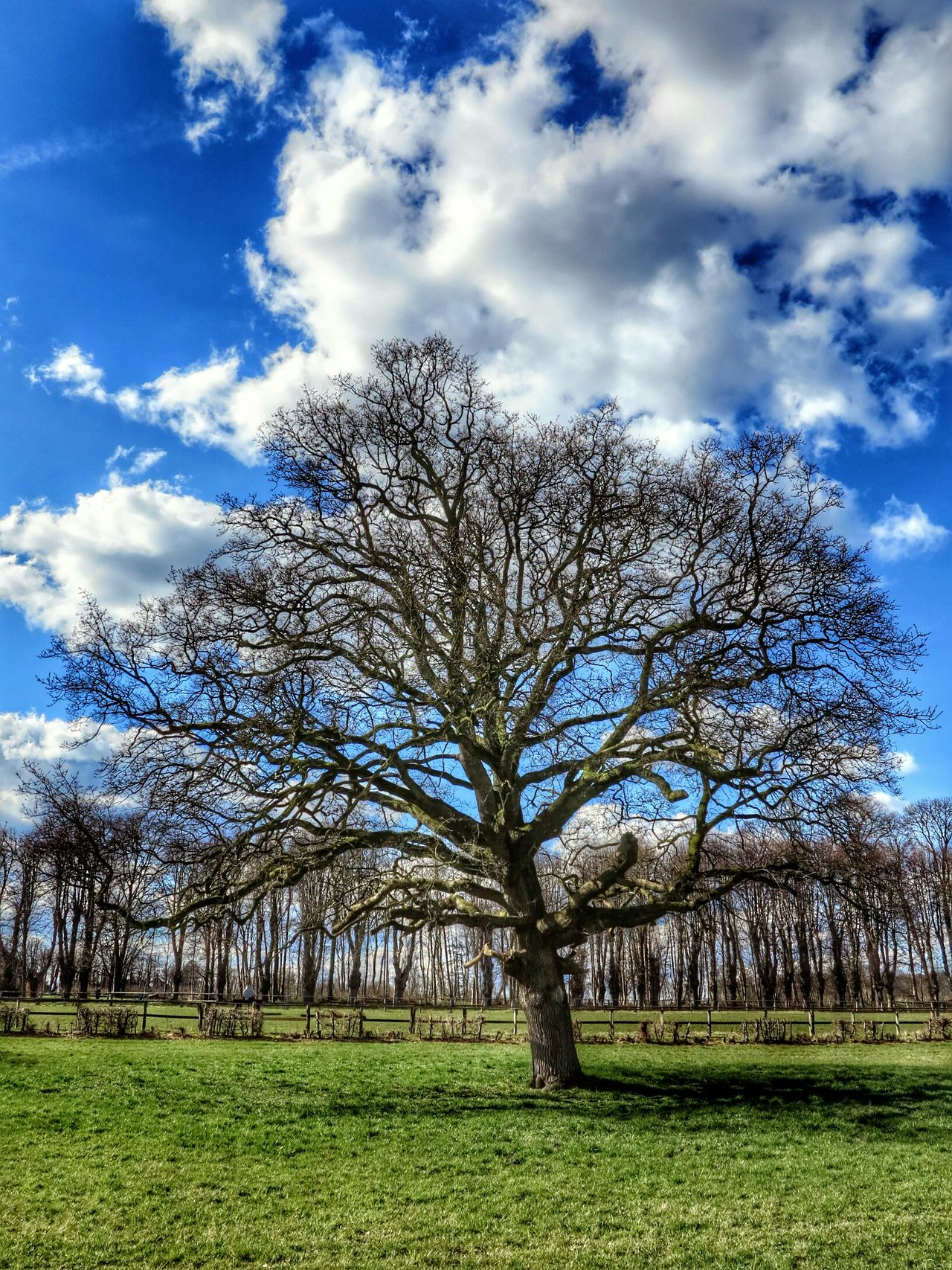 Nature Natur Stormarn Schleswig-Holstein HDR EyeEm Nature Lover Tree TreePorn Tree And Sky Sky