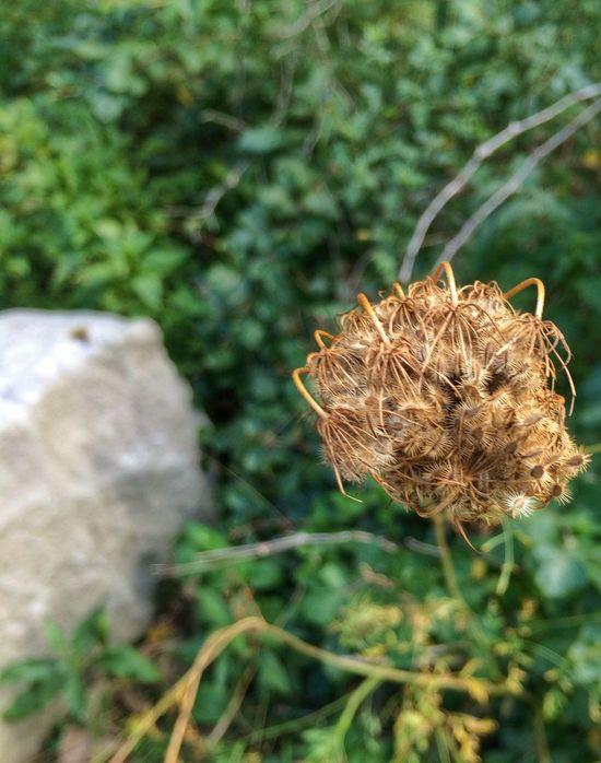 Nature Nature_collection EyeEm Nature Lover Naturelovers Nature Photography Beautiful Nature Nature On Your Doorstep Nature_perfection Nature Collection Eye Em Nature Lover