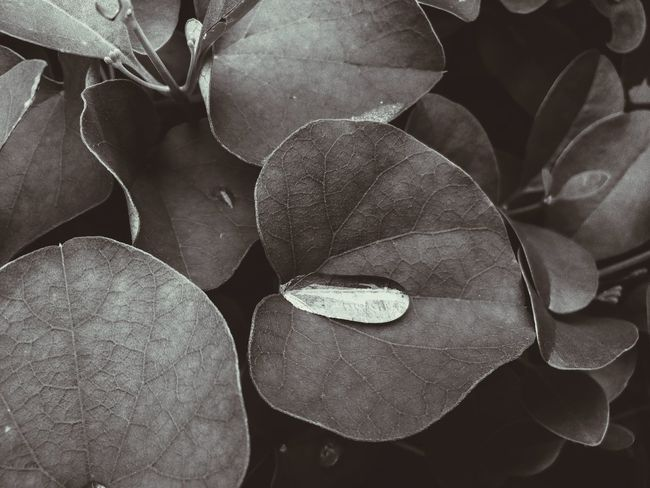 Happiness Creative Light And Shadow Photography Enjoying Life The Purist (no Edit, No Filter) Getting Inspired EyeEm Best Shots Blackandwhite Bnw Learn & Shoot: Layering @aiiko Aiikos Heaven Aiikos Black.n.white Aiiko Untouched 💯pure Aiikos Rain.drops Aiiko Inspired Aiikos Paradise Aiikos Garden