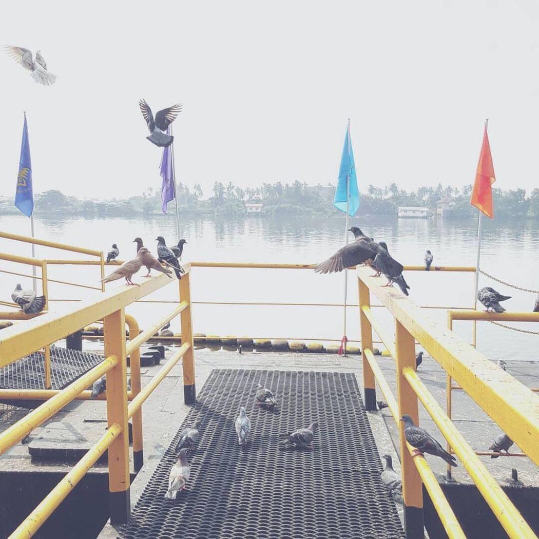 Flying Day River Outdoors Full Length Animal Themes Port Freedom Merit ASIA Bird Thailand Rama3 People Sky Only Men Bangkok