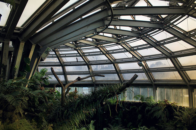 Alien Architecture Atmospheric Mood Botanical Garden Botany Contrast Darkness And Light Future Gloomy Green Growing Growth Lab Laboratory Life Melancholy Nature Nature No People Plants Plants And Flowers Science Fiction Sky Station Water