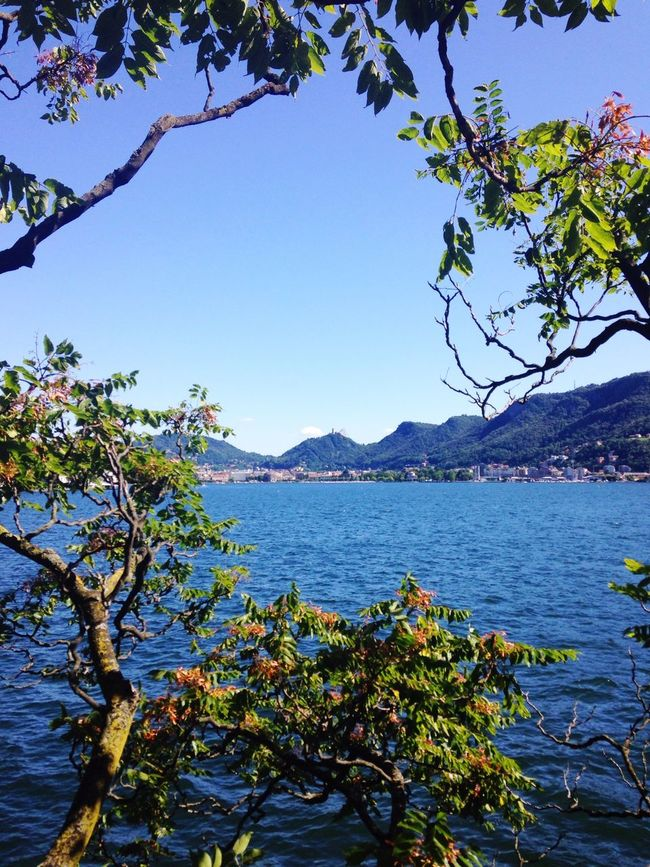Tree Growth Clear Sky Nature Beauty In Nature Blue Water No People Sea Outdoors Branch Scenics Sky Mountain Day Foreground Como Lake Lake View Italy Beautiful Beauty In Nature IPhoneography