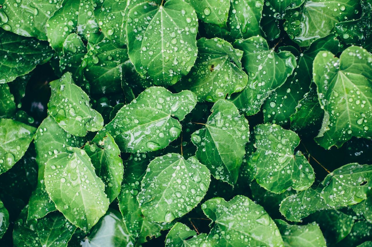 Beautiful stock photos of rain, Abundance, Backgrounds, Day, Drop