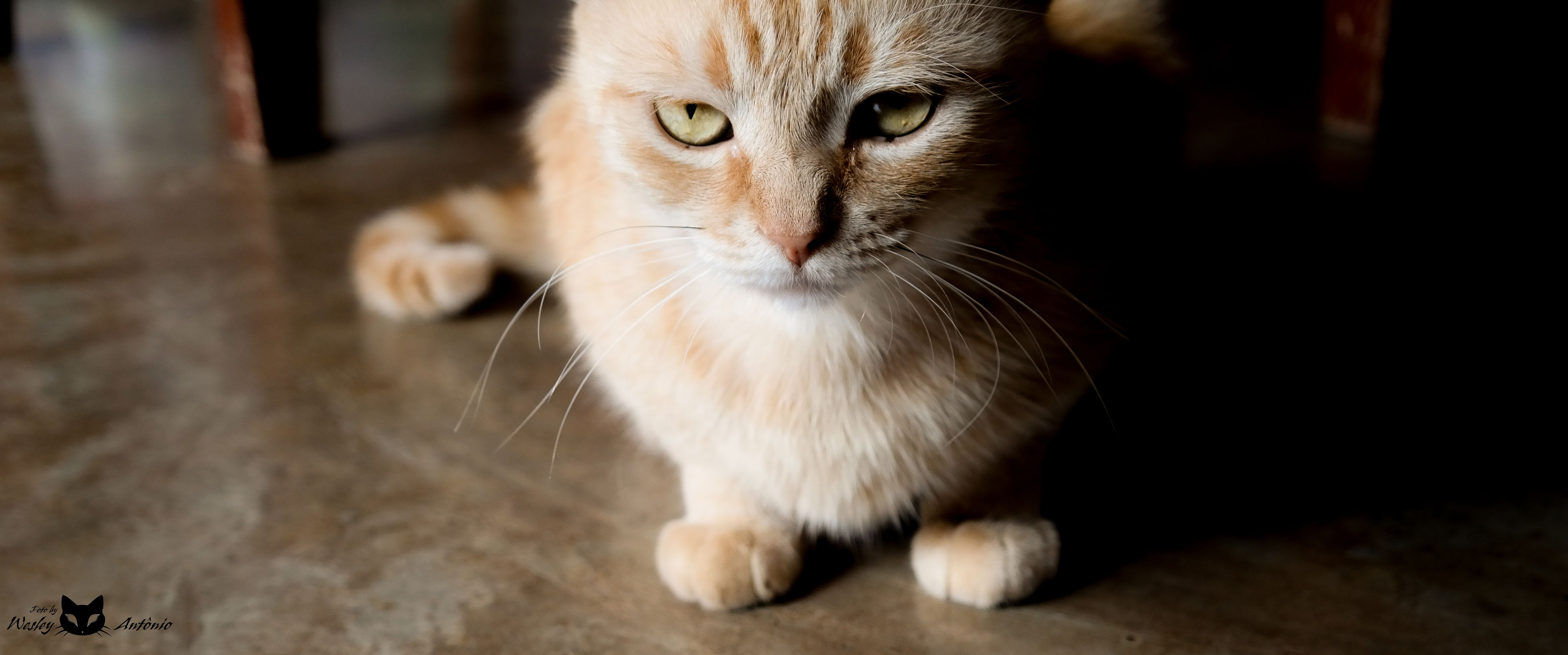 animal themes, one animal, pets, indoors, portrait, domestic cat, looking at camera, mammal, close-up, domestic animals, whisker, cat, focus on foreground, feline, sitting, alertness, no people, selective focus, animal eye