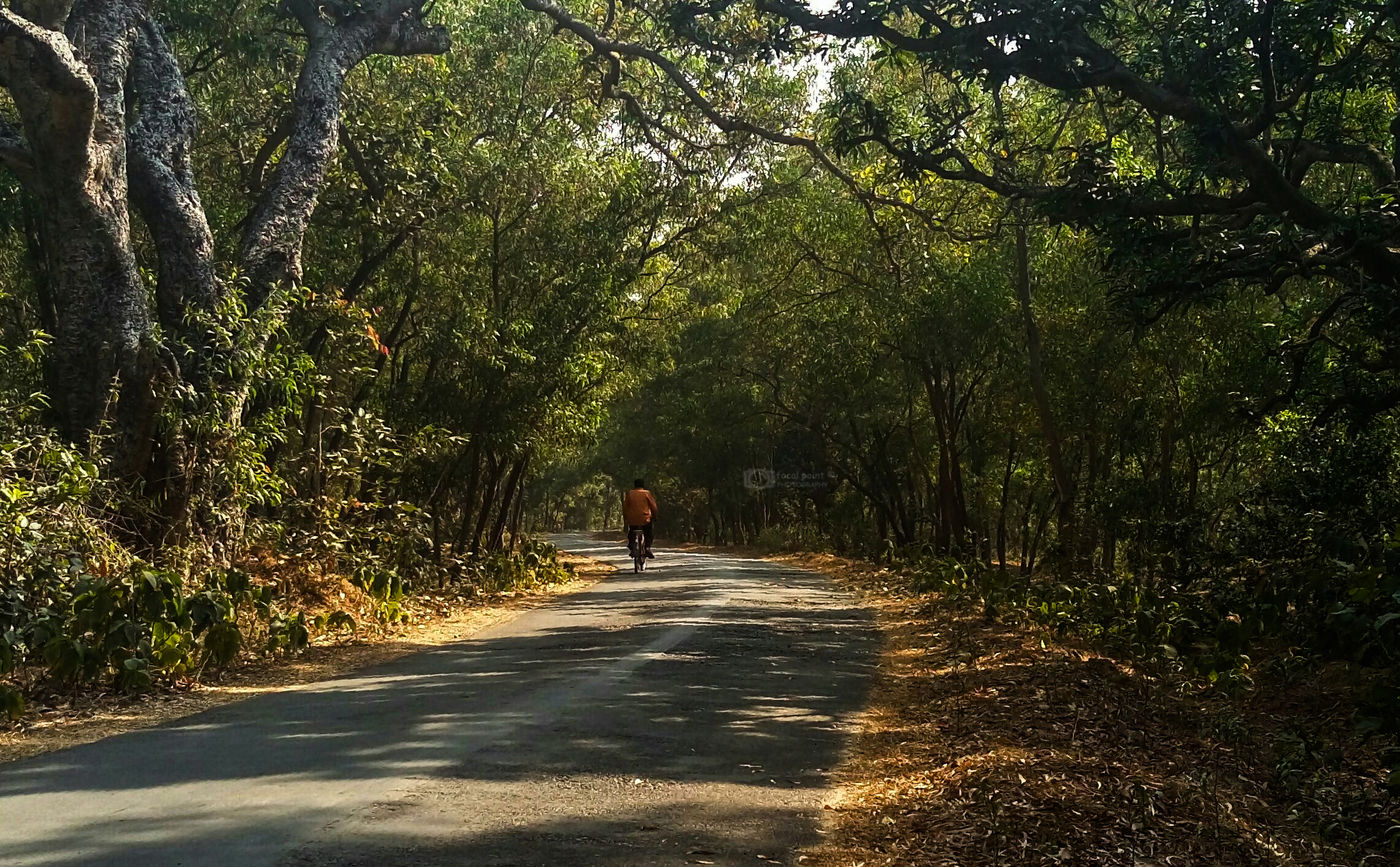 Countryside Forest Landscape Non-urban Scene Outdoors Remote Road Solitude The Way Forward Unrecognizable Person Vacations WoodLand