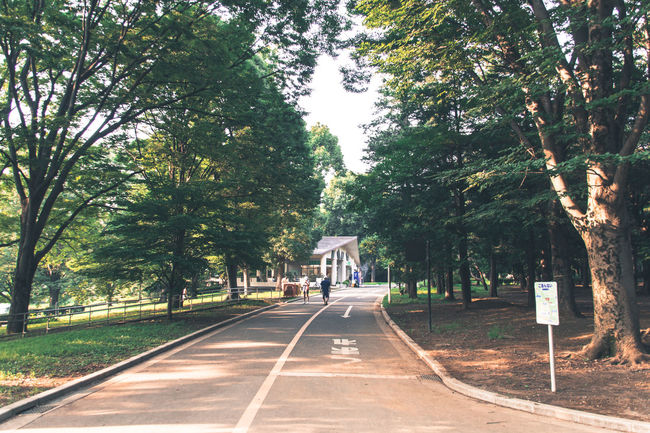 Park Mild Days The Calmness Within Pastel Smallpeople People Watching Everybodystreet Going The Distance End Of Summer Snapshots Of Life Summer Memories 🌄 Summer Views Capture The Moment Yoyogi Park Trees Nature On Your Doorstep Holiday POV Sport In The City Running People Life In Motion