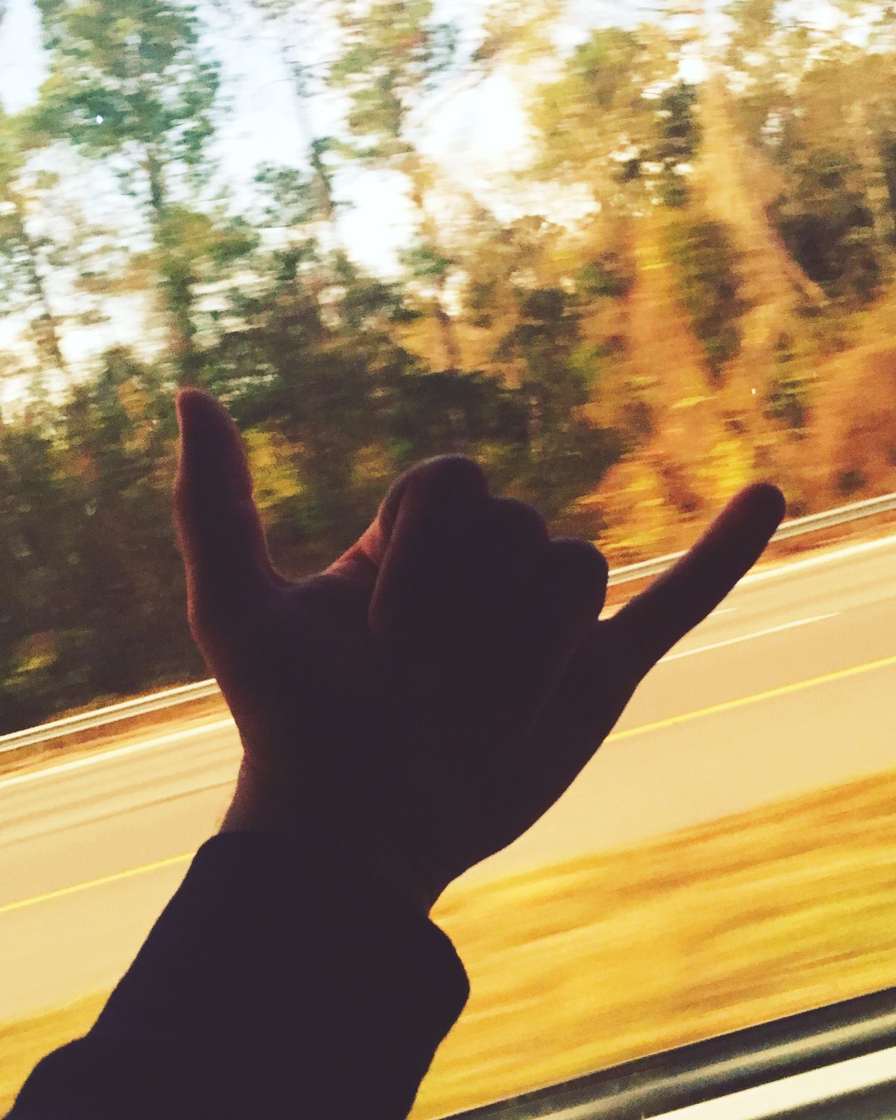 You can find peace where ever you go. Human Hand Tree Nature Close-up Sunlight Gesturing Window