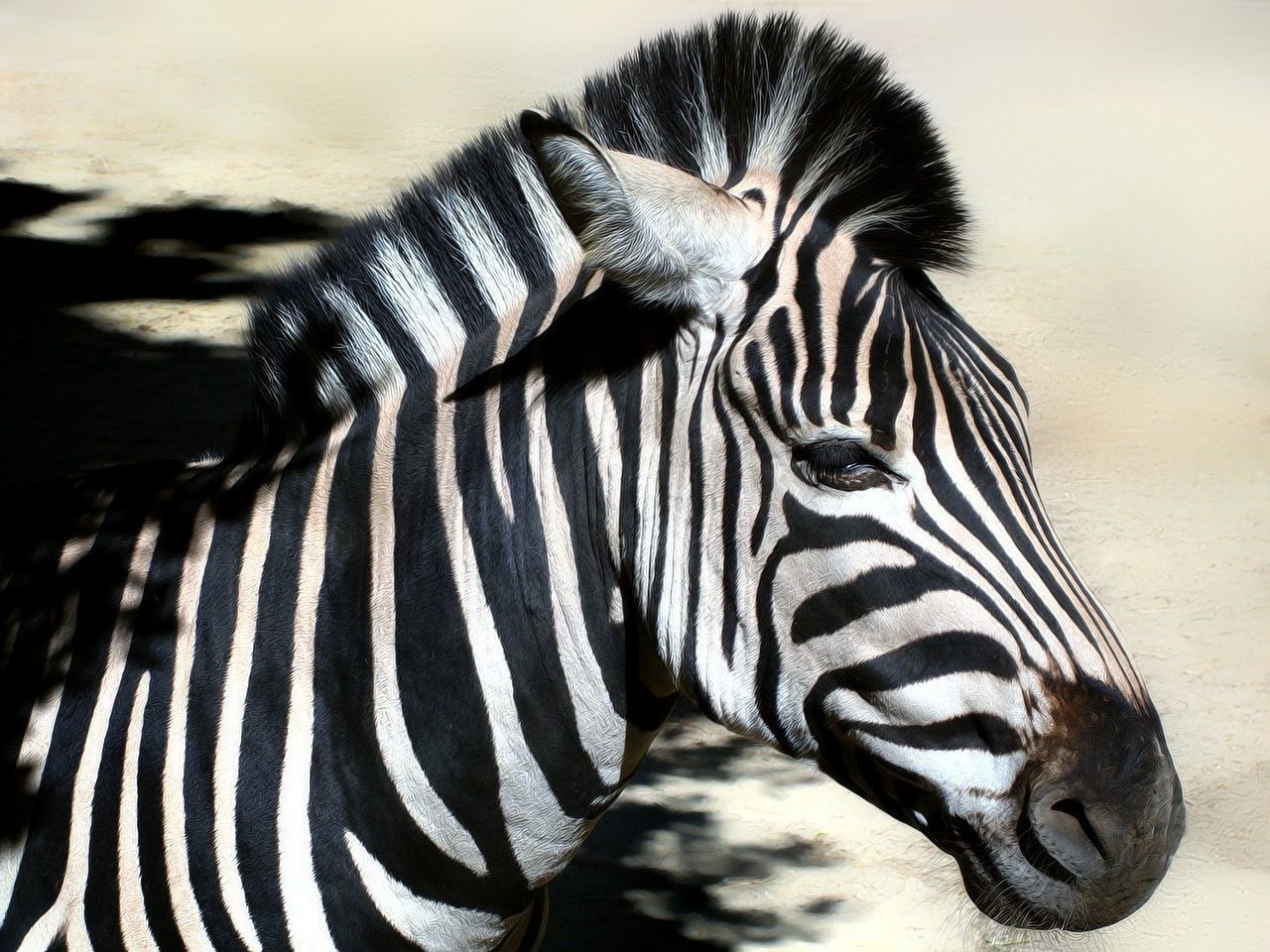 Beautiful stock photos of zebra, Animal Head, Animal Themes, Close-Up, Day