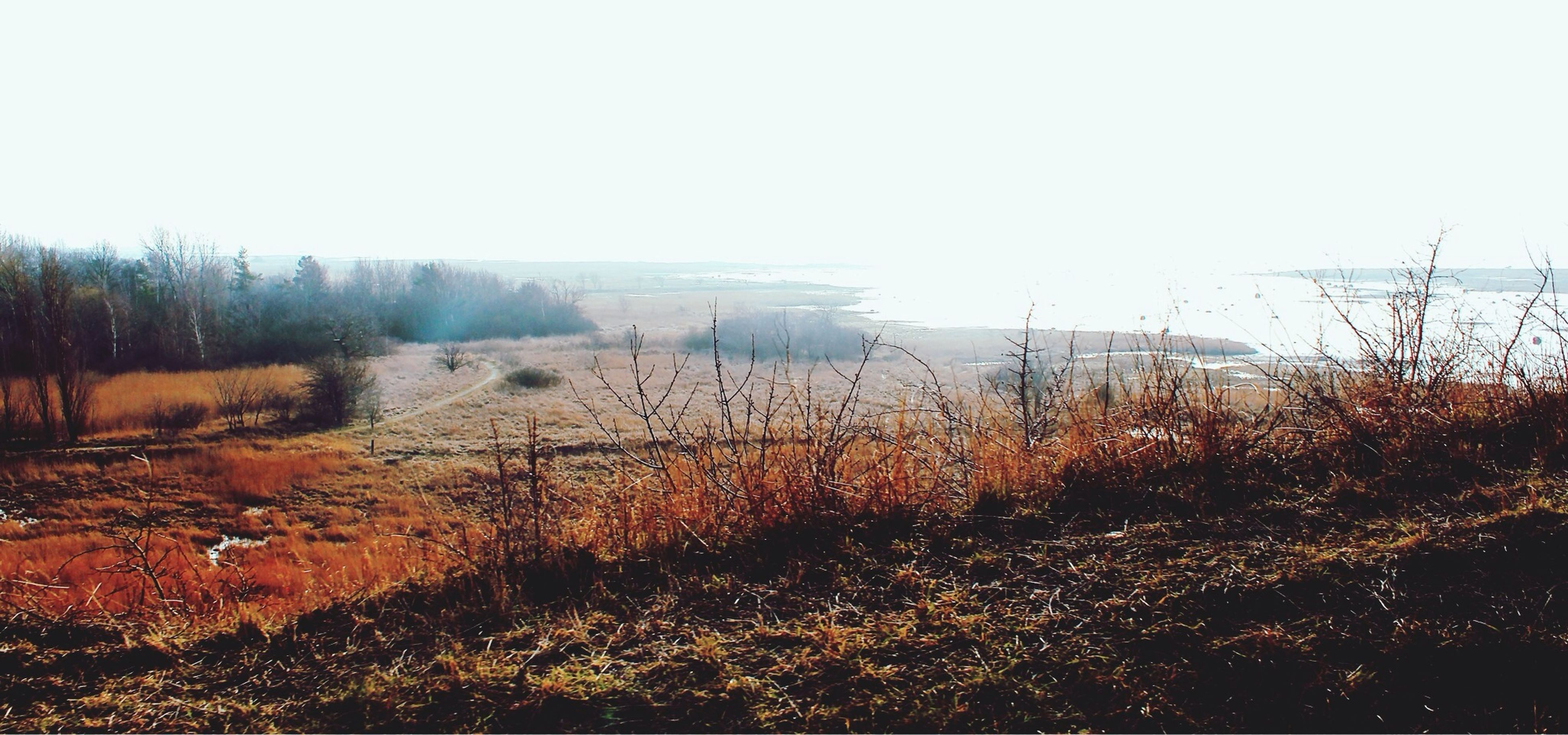 clear sky, tranquility, tranquil scene, landscape, copy space, plant, nature, beauty in nature, scenics, field, growth, foggy, non-urban scene, water, outdoors, sky, no people, dry, day