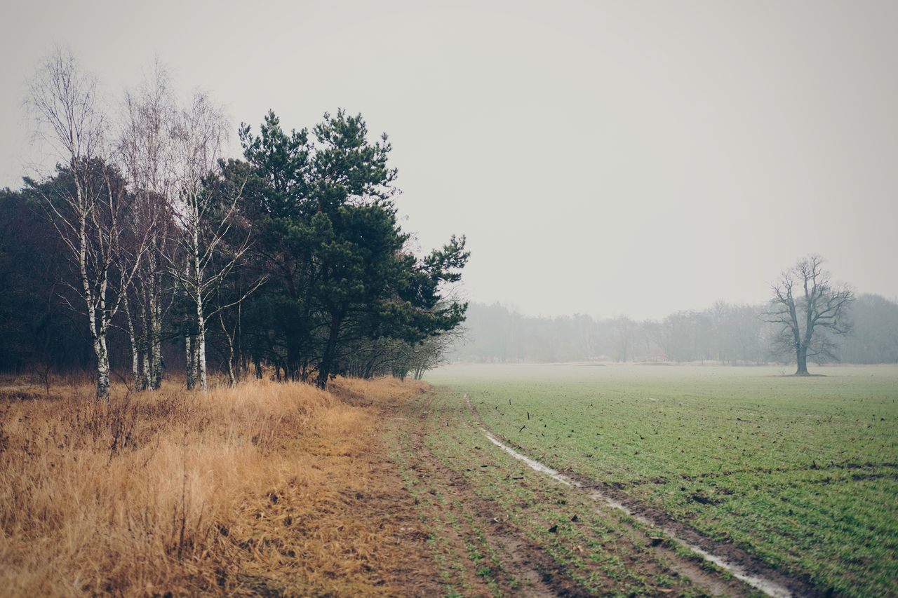 Agriculture Beauty In Nature Berlin Buch Branch Day Fog FUJIFILM X-T2 Fujinon 35mm 2.0 Grass Growth Landscape Nature No People Outdoors Poetic Photography Rainy Day Rural Scene Scenics Sky Tranquil Scene Tranquility Tree