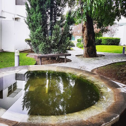 Water Day Tree Outdoors No People Nature Growth Swimming Pool Puddle Architecture Sky El Patio De Mi Casa Es Particular