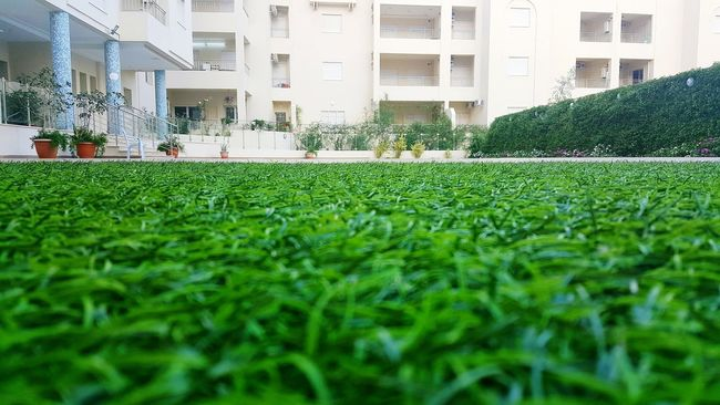 Nature Green Day Beauty In Nature The Way Forward Green Color Flowers, Nature And Beauty Green Leaves Home Is Where The Art Is Home Sweet Home At Home Sweet Home At Home :) EyeEm Nature Lover EyeEm Best Shots Eye Em Nature Lover Eye Em Best Shots