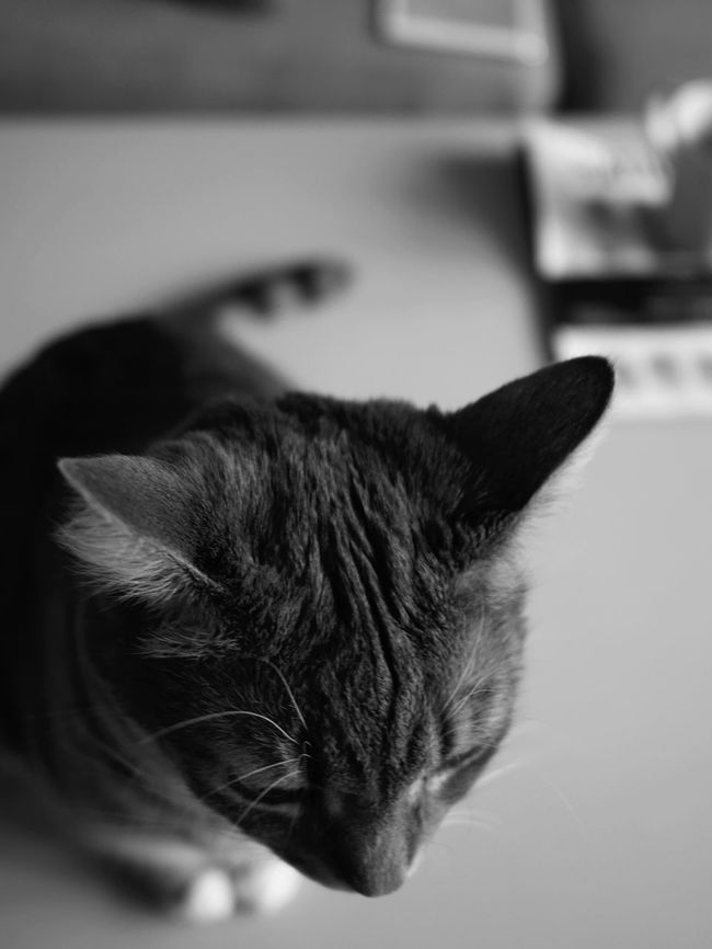 Pets Domestic Animals Domestic Cat One Animal Mammal Animal Themes Feline Indoors  Cat Close-up No People Day Background Furry Fur High Angle View Ear Hairy  Cute Cats Blackandwhite Photography Black And White Photography Kitten Cute Overhead View Domestic