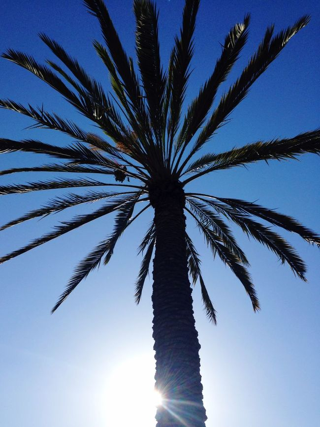 California daydream! Commuting Northern California Sunny Day Palm Trees Daydreaming Blue Sky