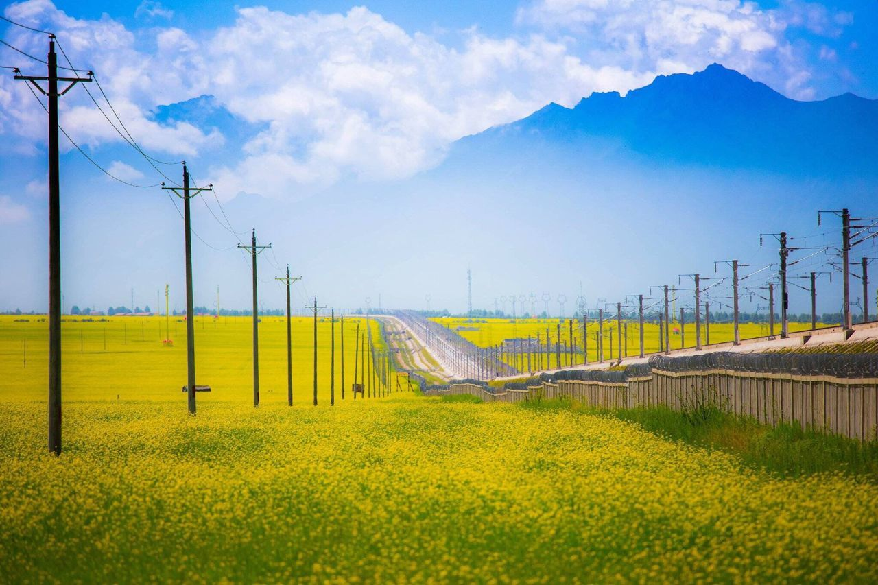 Electricity Pylons And Street Amidst Oilseed Rape Field