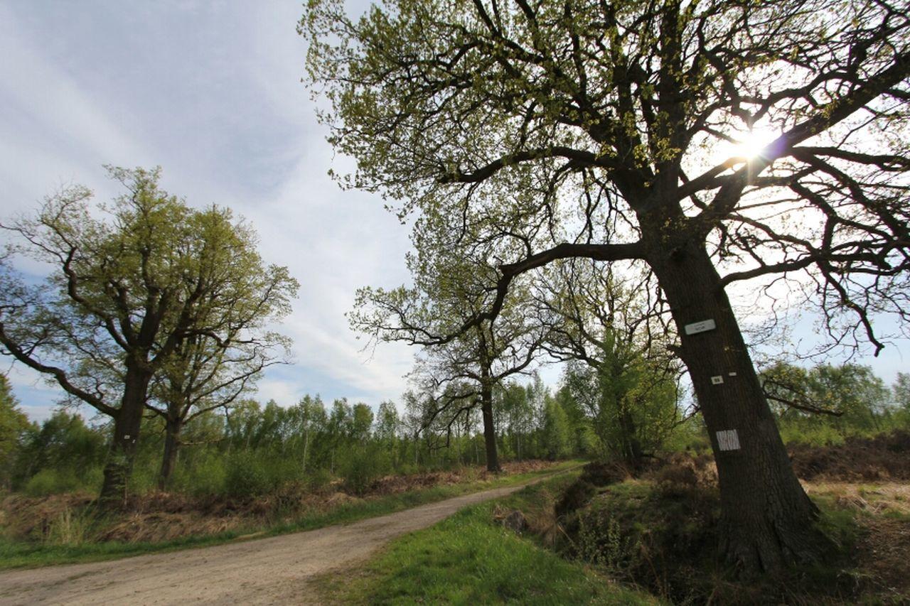 Landscape Trees Nature_collection Landscape_Collection