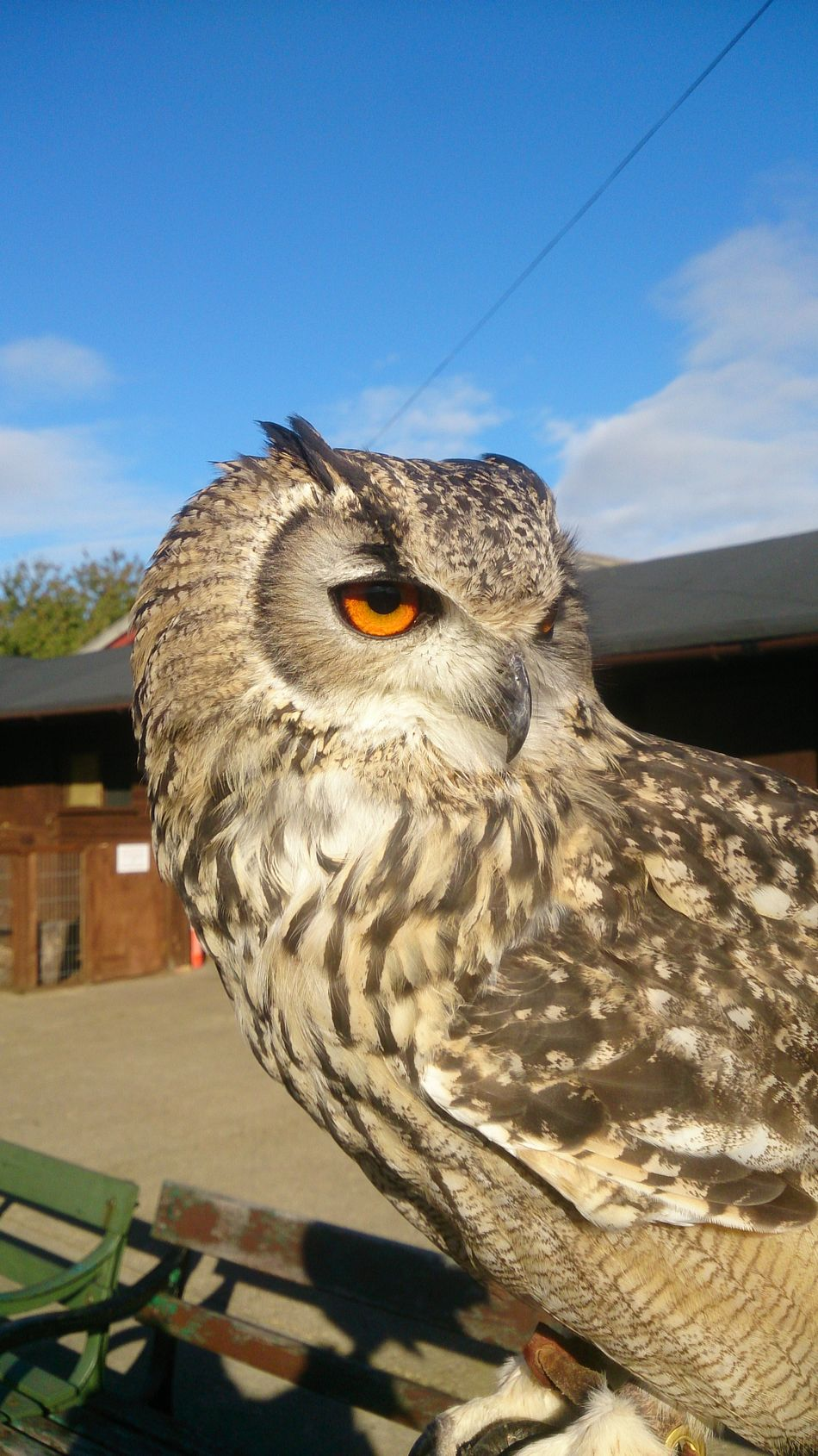 Amazing_birds Owls