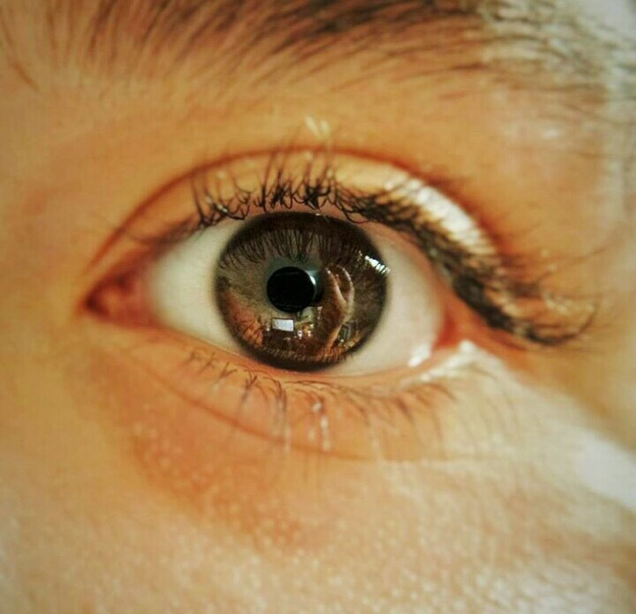 Eye Human Body Part Human Eye Close-up Looking At Camera Iris - Eye Eyeball Portrait One Person Day Macro Eyelash People Eyebrow Self Potrait Brown Eyes Brown Color Reflection Hands Camera EyeEmNewHere