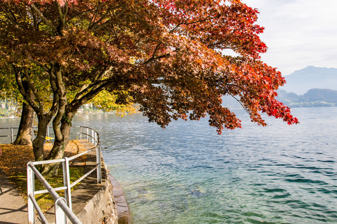 The colors of autumn. Beauty In Nature Lakeside Nature No People Outdoors Scenics Tranquility Tree Water