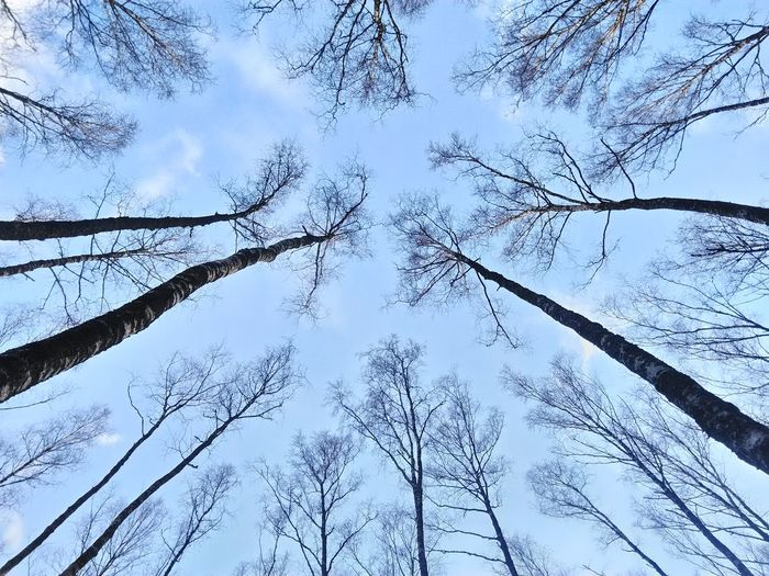 Low Angle View Nature No People Day Branch Sky Tree Beauty In Nature Outdoors Backgrounds Forest Growth Close-up Freshness