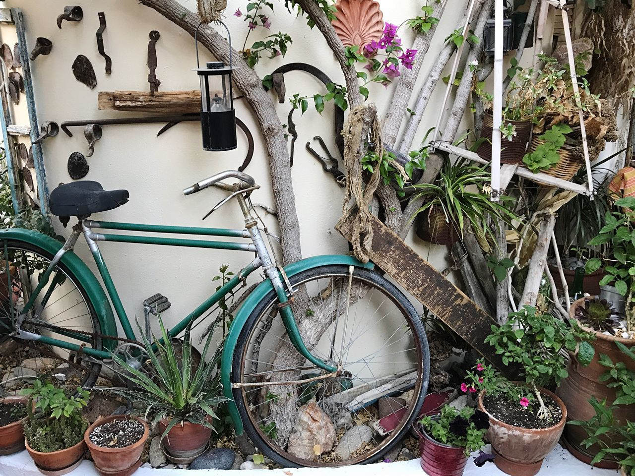 bicycle, plant, potted plant, land vehicle, mode of transport, transportation, growth, no people, day, stationary, outdoors, flower, nature