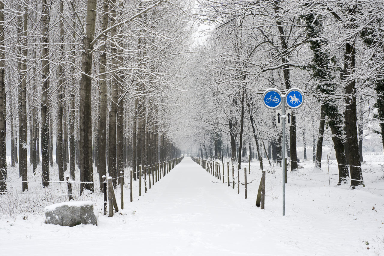 Winter walk path in Ticino, Switzerland. Beauty In Nature Branch Cold Temperature Day Diminishing Perspective Fence Forest In A Row Landscape Nature No People Outdoors Path Signboard Snow Snowing Tranquil Scene Tranquility Tree Walk Path Walkway Winter