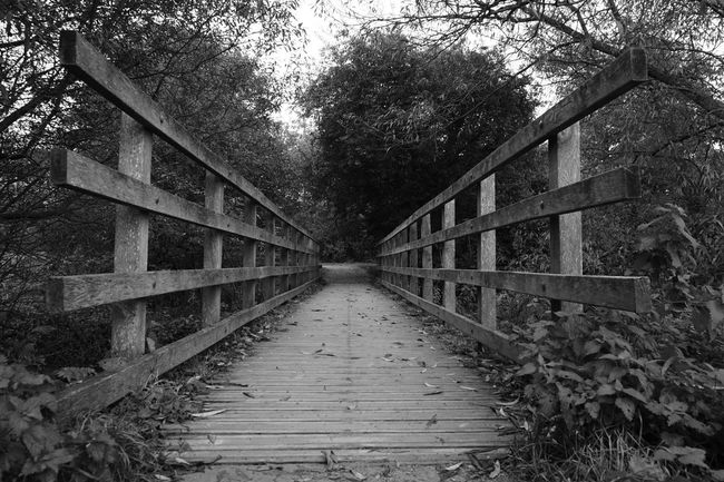 Across The Bridge Tree Nature Outdoors The Way Forward Day No People Bridge - Man Made Structure Connection Bridge Cheshire Nantwich Uk England Autumn Monochrome Monochrome Photography Sony A5000 Autumn Colors Autumn Leaves Autumn🍁🍁🍁 First Eyeem Photo
