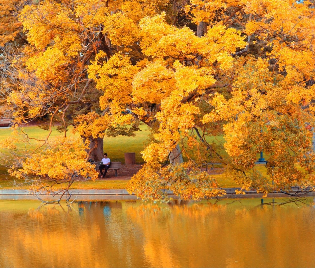 autumn, change, leaf, maple tree, tree, nature, beauty in nature, reflection, orange color, lake, water, maple leaf, scenics, outdoors, forest, tranquil scene, day, tranquility, yellow, full length, deciduous tree, no people, branch