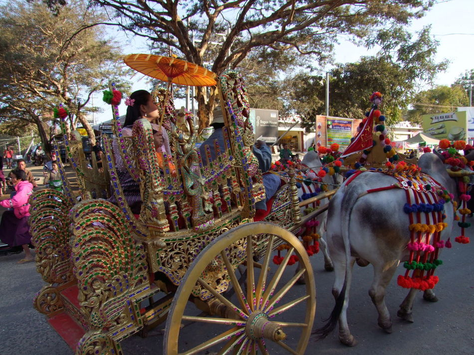 Shin Pyu Ceremony, Ornate Carriage pulled by Bullocks Bagan Blue Sky Buddhist Culture Buddhist Tradition Bullock Cart Bullocks Ceremonial Carriage Ceremony Close Up Composition Full Frame Multi Coloured Myanmar Outdoor Photography People Procession Sunlight And Shade Tourist Attraction  Traditional Clothing Travel Destination Tree Umbrella