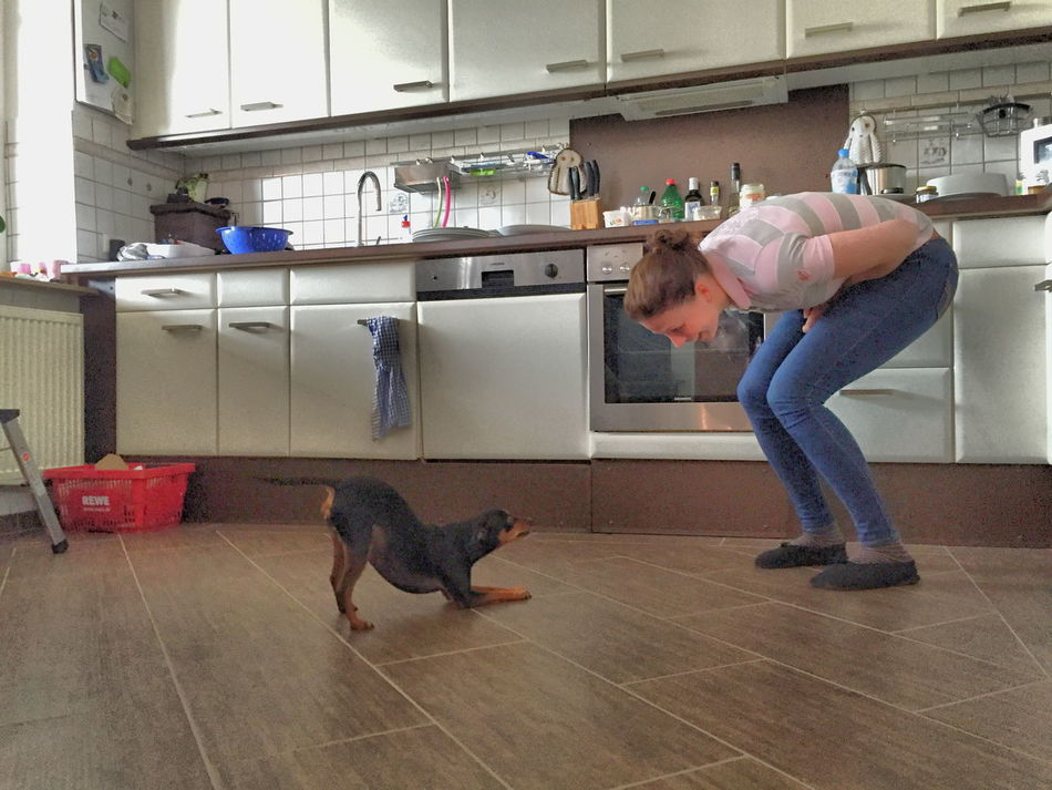 Animal Themes Day Dog Domestic Animals Domestic Kitchen Home Interior Indoors  Kitchen Lifestyles One Animal One Person People Pets Real People Standing Young Women