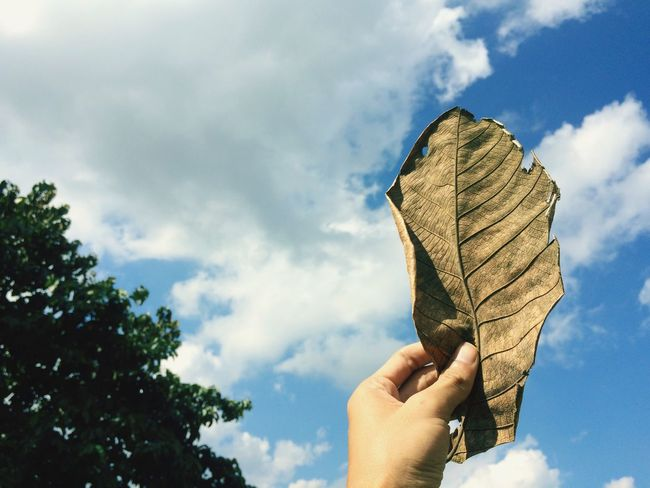 Dried leaves on sky background / Vintage style Sky Human Hand Holding Real People Cloud - Sky One Person Nature Outdoors Lifestyles Tree Leisure Activity Day Close-up Human Body Part Beauty In Nature Freshness Leaf Leaves Dry Dried Brown Wallpaper Abstract